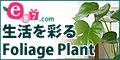 観葉植物 e87.com(千趣会イイハナ)