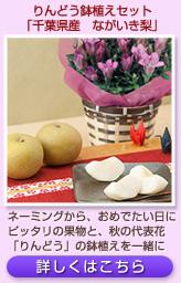 りんどう(ピンク)鉢植えセット「千葉県産 ながいき梨」