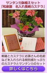サンタンカ鉢植えセット「和泉屋 名入れ長崎カステラ」