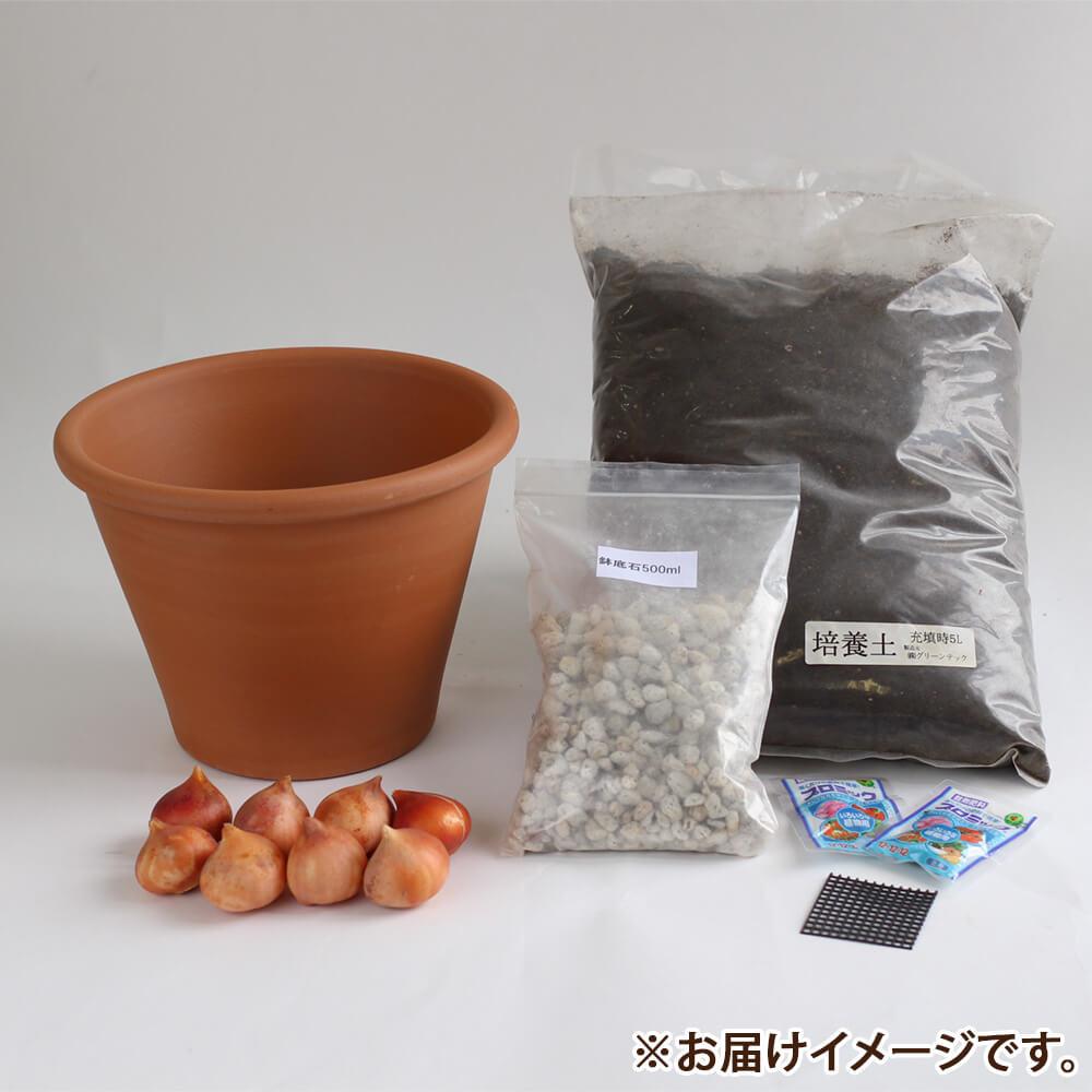 秋植え球根キット「ユリ咲きチューリップミックス」