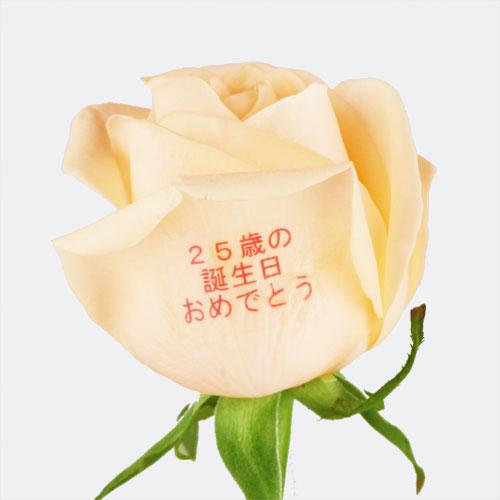 """EXレター・ローズ""""Peach and Pink MIX"""" 〜バラに気持ちを託して〜"""