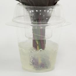 水がこぼれにくい仕様のカップに保水剤(ゼリー)が入っているので、ラッピングを外さずそのまま飾れます。