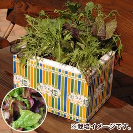 栽培キット「おうち畑=ベビーリーフ・レタスMIX=」