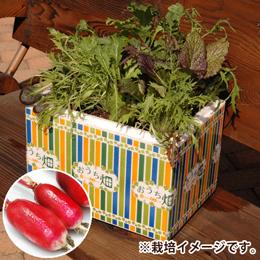 栽培キット「おうち畑〜紅白二十日ダイコン〜」