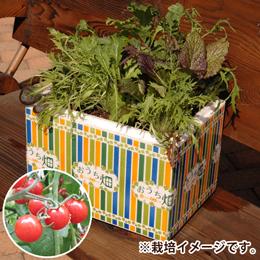 栽培キット「おうち畑〜ミニトマト〜」