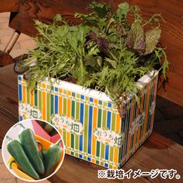 栽培キット「おうち畑〜こどもピーマン〜」