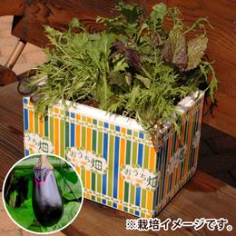 栽培キット「おうち畑〜ナス〜」