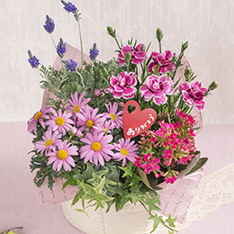 母の日 寄せ鉢「スイート・ピンク〜幸せカラーのバスケット〜」