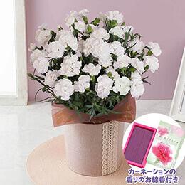 鉢植え「お母さんを偲ぶ白いカーネーション」〜お線香付き〜