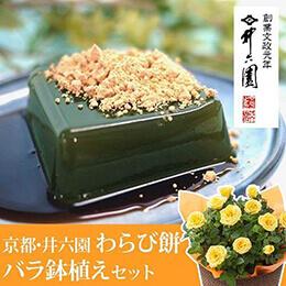 父の日 バラ鉢植えセット「京都・井六園 宇治抹茶わらび餅」