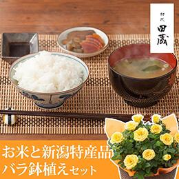 父の日 バラ鉢植えセット「選べる美味しい国産米カタログと新潟特産品詰め合わせセット」