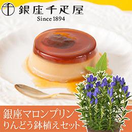 敬老の日 鉢植えセット「銀座千疋屋 銀座マロンプリン」