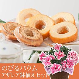 敬老の日 鉢植えセット「のびるバウム詰め合わせ」