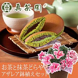 敬老の日 鉢植えセット「真茶園 茶匠が選んだお茶と抹茶どらやき詰合せ」