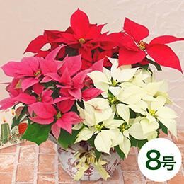 鉢植え「ミックス・クリスマス(8号)」