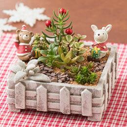 寄せ植え「みんなおいでよ 森のクリスマス」