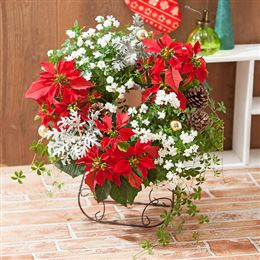 寄せ植え「クリスマスリース~華やかなリースでおもてなし~」