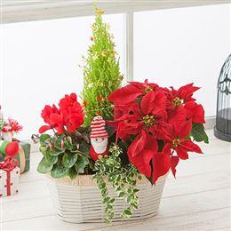 寄せ鉢「クリスマス・ガーデン~サンタさんのお庭~」