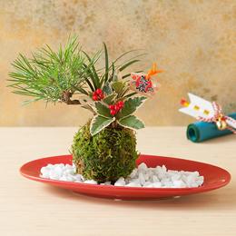 お正月 盆栽「新春慶び苔玉」