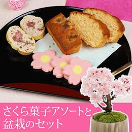 盆栽セット「春爛漫 さくら菓子アソート」