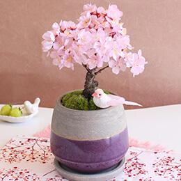 EX盆栽「はんなり桜」