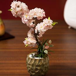 盆栽「南殿桜」