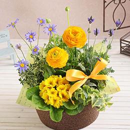 【春の花特集】【最速で翌日配送対応】寄せ鉢「フレッシュ・サンシャイン」