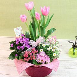 【春の花特集】【最速で翌日配送対応】寄せ鉢「スプリング・ハーモニー」