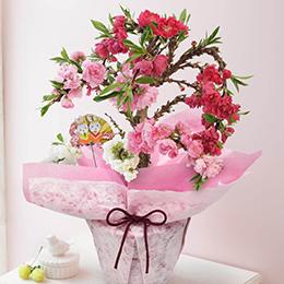 【ひなまつり特集】【最速で翌日配送対応】鉢植え「初節句を祝う桃の鉢植え」
