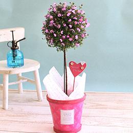 EX鉢植え「愛のかんざし トピアリー仕立て」