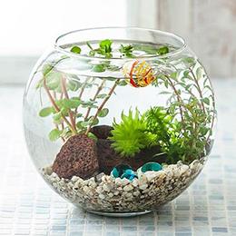 鉢植え「アクアリウムキット 癒しの水中庭園」