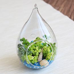 観葉植物「テラリウムキット〜マリンブルー〜」
