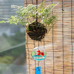 観葉植物「風鈴しのぶ〜涼やかな夏の音〜」