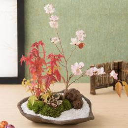 【最速で翌日配送対応】盆栽「四季を感じる十月桜」