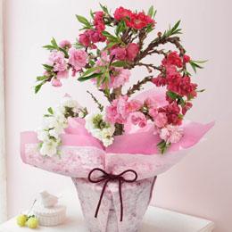 【最速で翌日配送対応】鉢植え「南京桃=艶やかな3色咲き分け=」