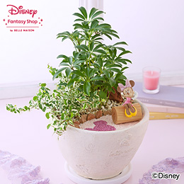 ディズニー 寄せ植え「ロマンティック・ガーデン」