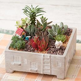 寄せ植え「ルーフ・ガーデン〜ポチの庭〜」