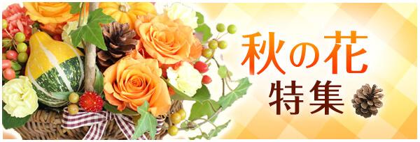 秋の花特集
