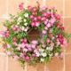 お花のお癒し効果をプレゼント