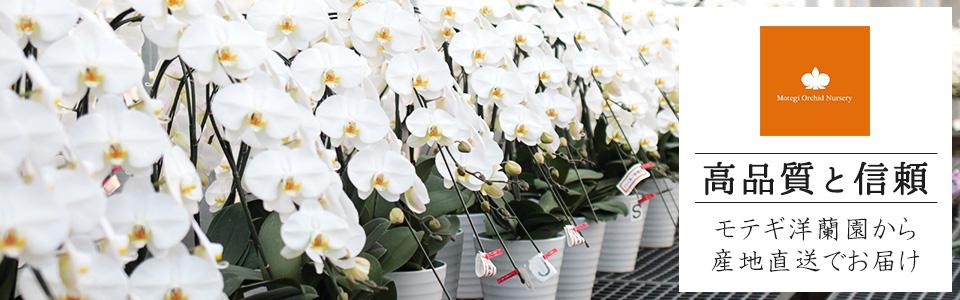 高品質と信頼 モテギ洋蘭園