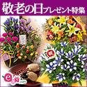 e87.com (イイハナ・ドットコム)