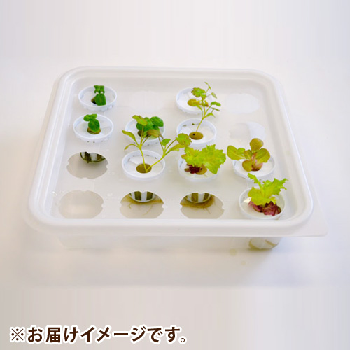 LEDプランター用水耕栽培苗「彩りサラダ苗セット」
