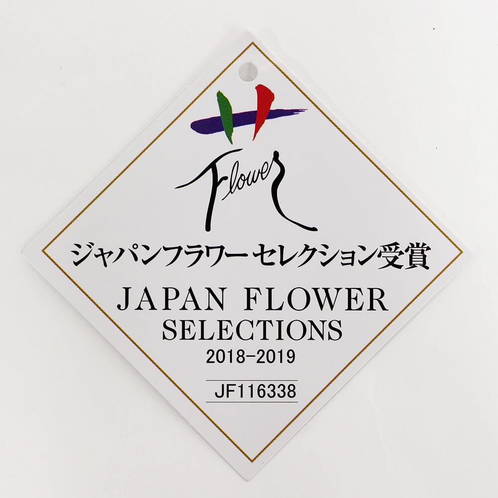 鉢植え「長寿を祝う胡蝶蘭〜白絹〜」
