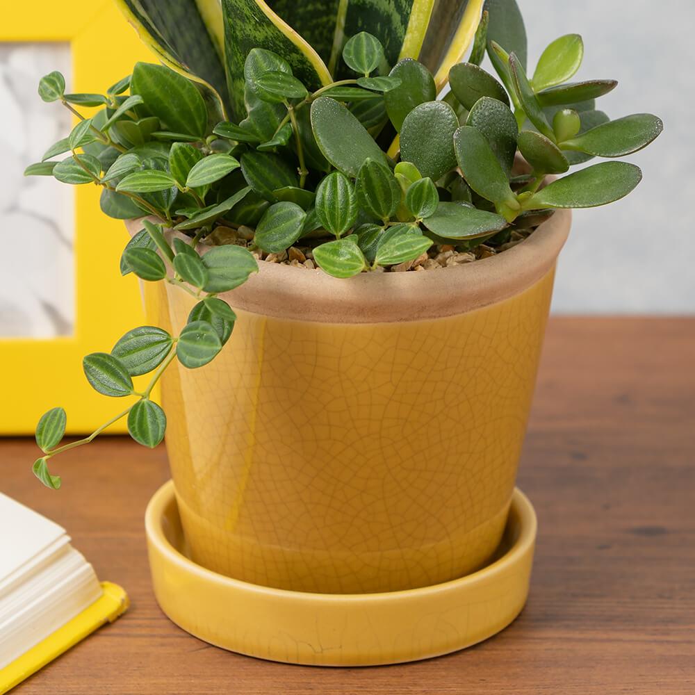 寄せ植え「幸運の黄色いプランツ」