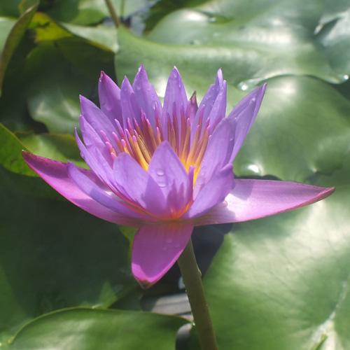 【毎月お届け】世界を花で旅する頒布会(7月お届け)