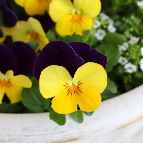【毎月お届け】世界を花で旅する頒布会(10月お届け)
