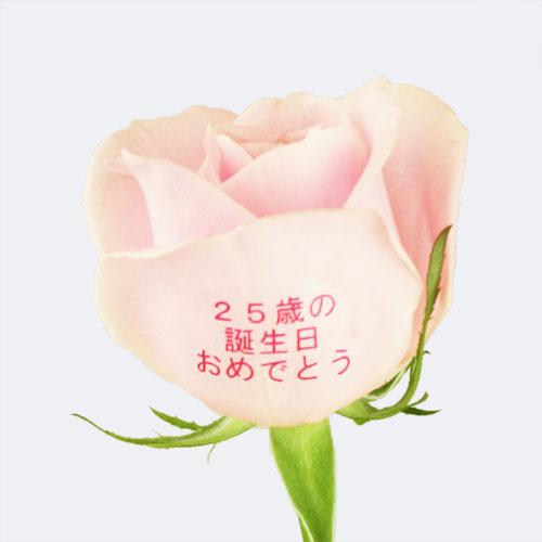 """EXレター・ローズ""""Pale PINK"""" 〜バラに気持ちを託して〜"""