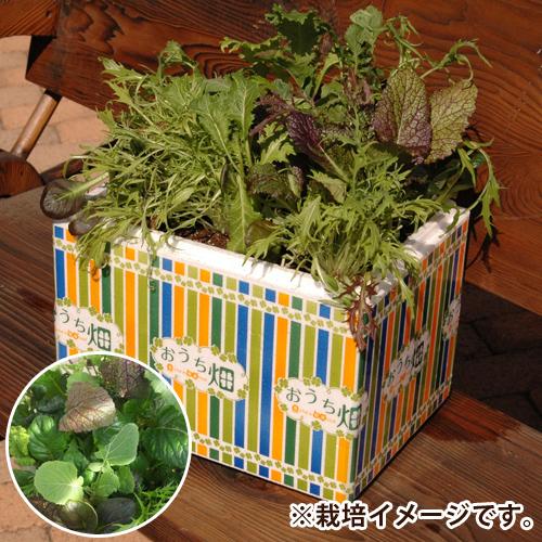 栽培キット「おうち畑〜ベビーリーフ・10種類の葉っぱMIX〜」