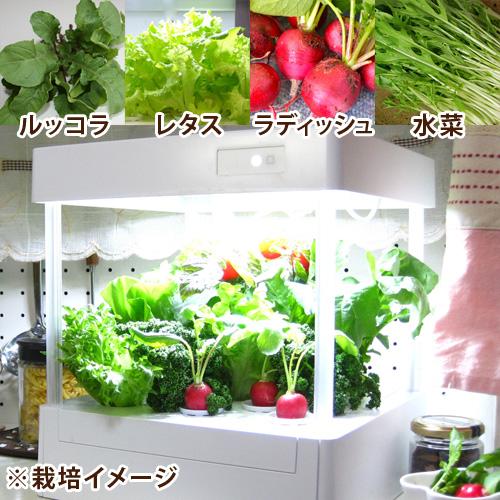LEDプランター栽培キット「彩りサラダセット」
