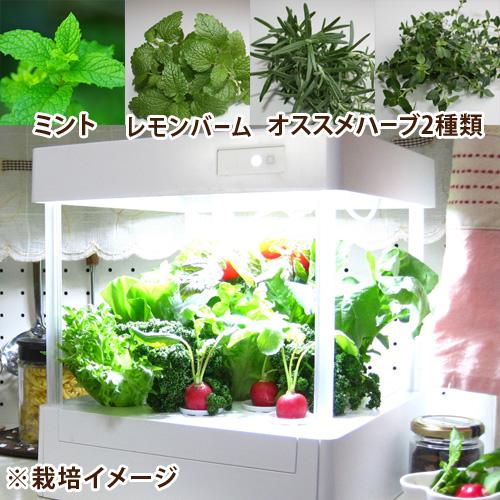 LEDプランター栽培キット「フレッシュハーブセット」